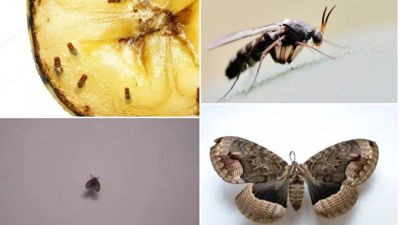 4種家居常出現的小昆蟲