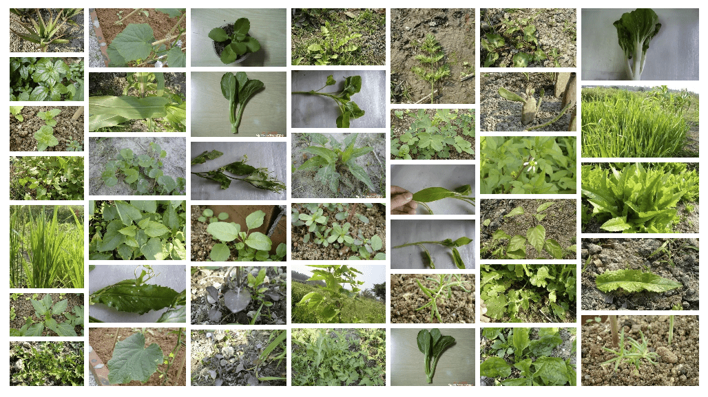 陸龜糧食圖鑑 - 35種蔬菜篇
